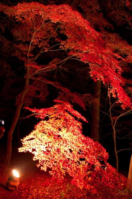 111027森林公園ライトアップ08