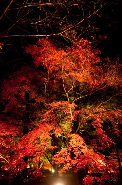 111027森林公園ライトアップ07