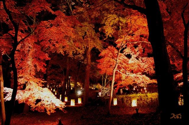 111027森林公園ライトアップ15