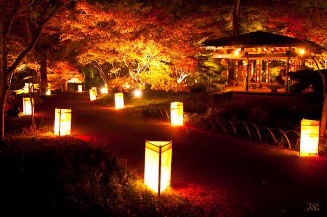 111027森林公園ライトアップ14