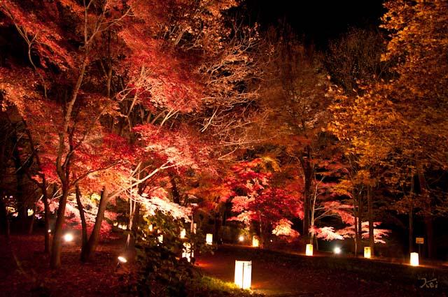 111027森林公園ライトアップ13