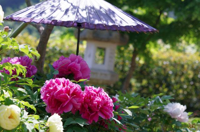 20120513牡宝徳寺06