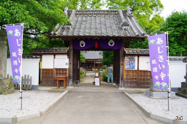 20120624アジサイ_能護寺02