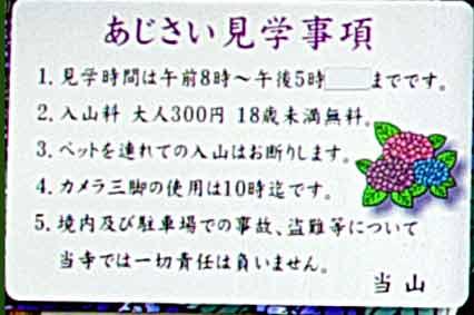 20120624アジサイ_能護寺20
