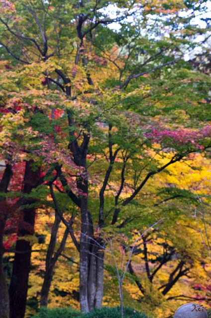 20121118徳明園08