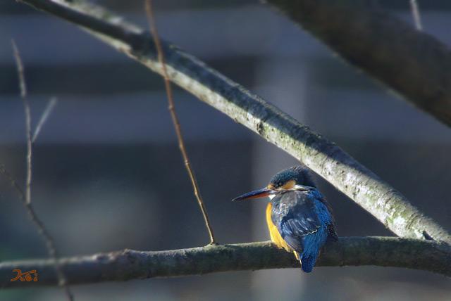 20130126野鳥04