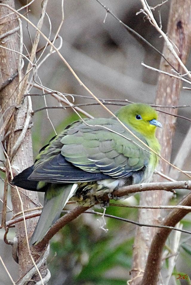 20130126野鳥01