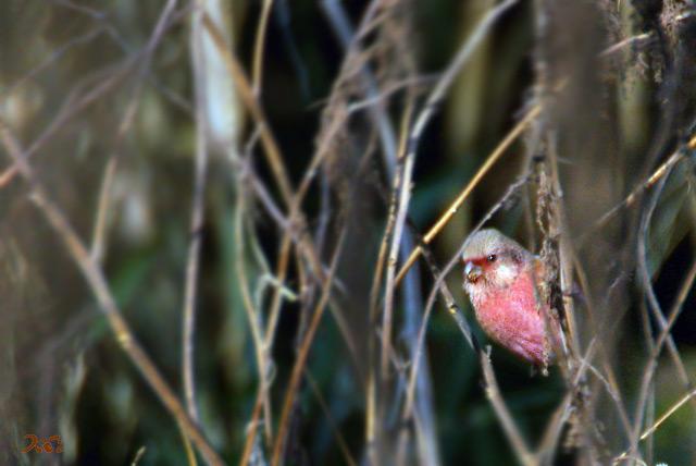 20130126野鳥02