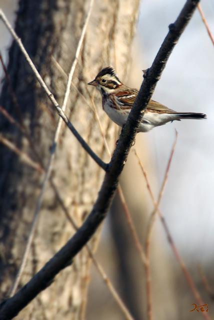 20130126野鳥08