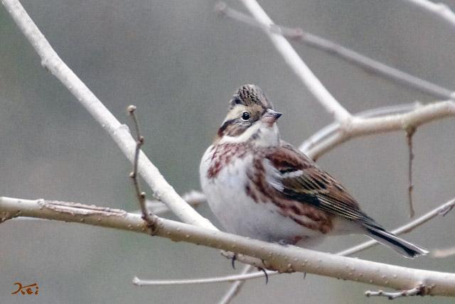 20130126野鳥06