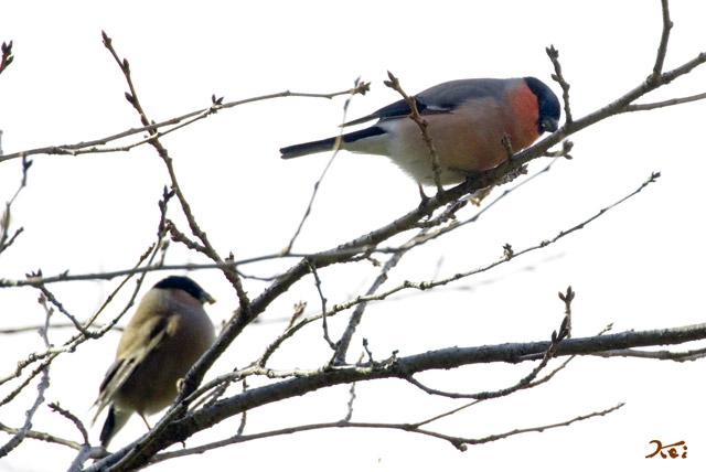 20130126野鳥09