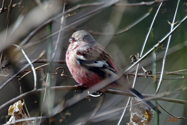 20130126野鳥13