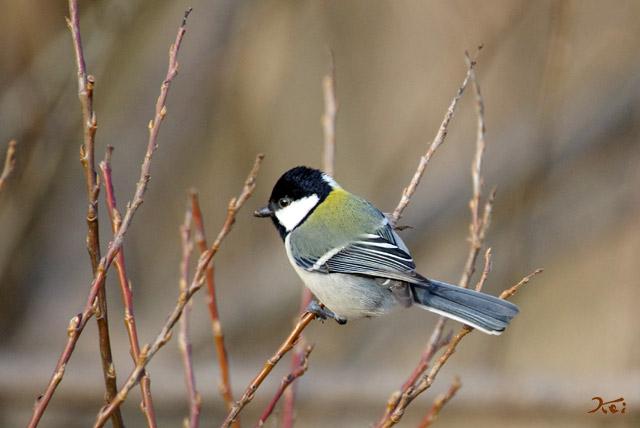 20130126野鳥12