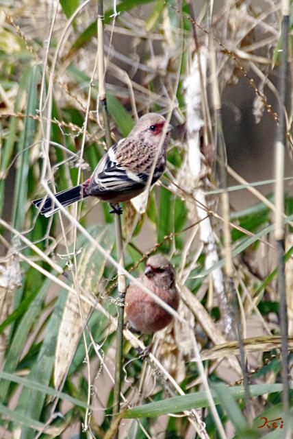20130126野鳥17