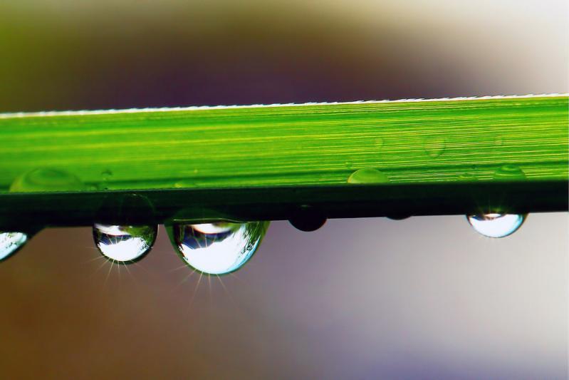 DSC01096-2 雨上がり 水滴