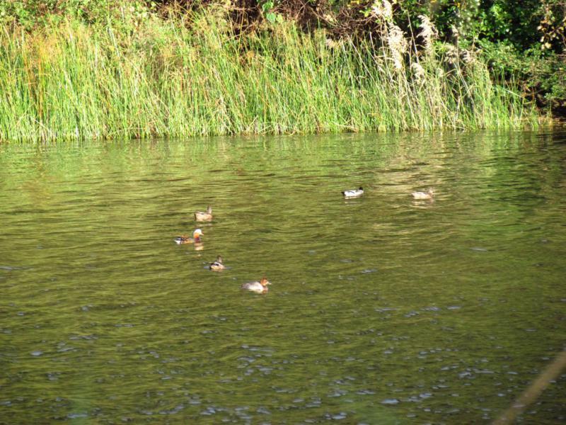 鍬﨑池に 12.4