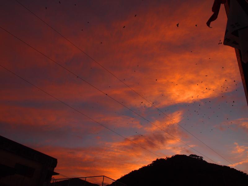夕空 のカラス