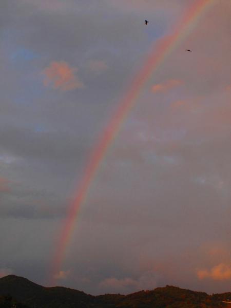 虹とカラス