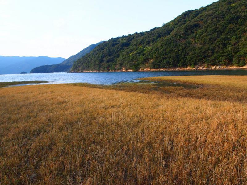 一面に芝生の海岸