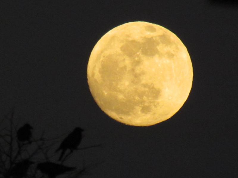 今夜の満月 夕暮れのカラスと
