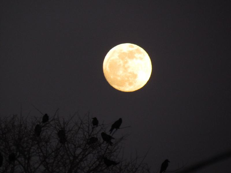 東の空に満月のお月様とカラスたち