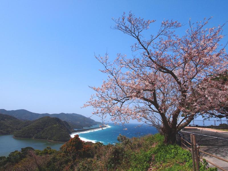 長目の浜展望所の桜の風景