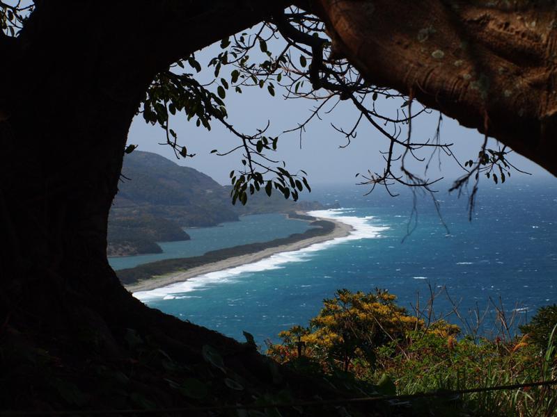 アコウの木からの長目の浜