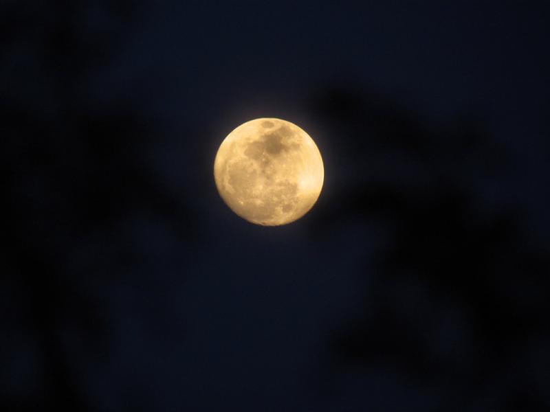 今夜のお月さま