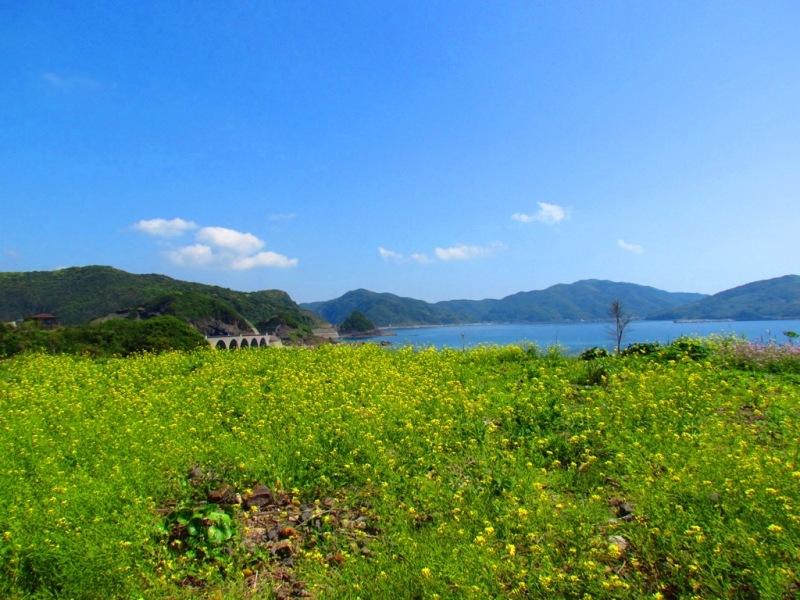 菜の花と風景