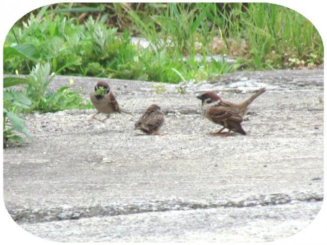 ひっきりなしに親鳥たちが来ます
