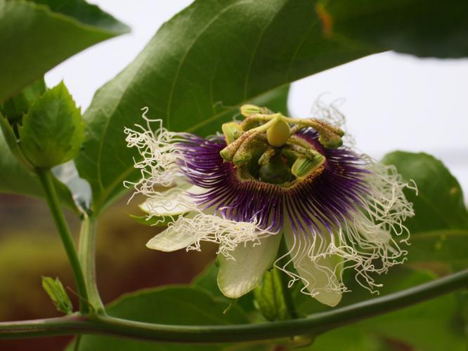 露地栽培の花