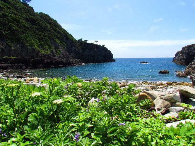 ハマゴウが咲く海岸