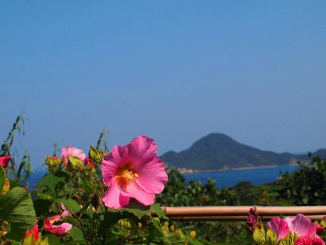 芙蓉の花と西の海
