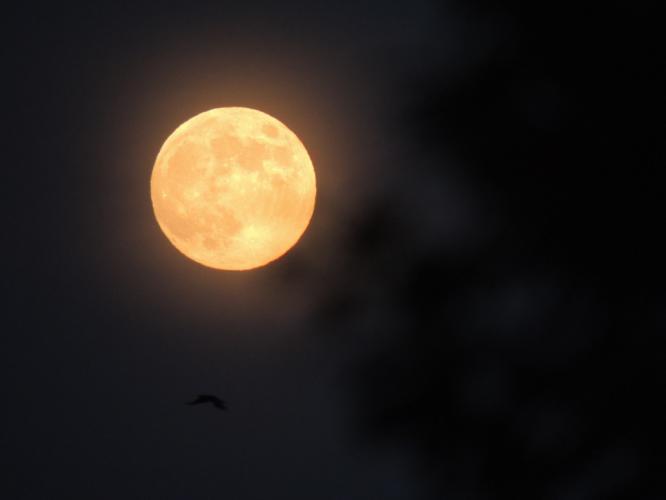 十五夜のお月さま 1