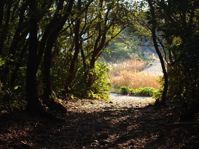 長目の浜への木立の小道