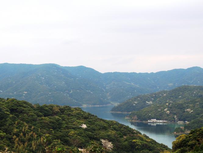 山桜の風景 1