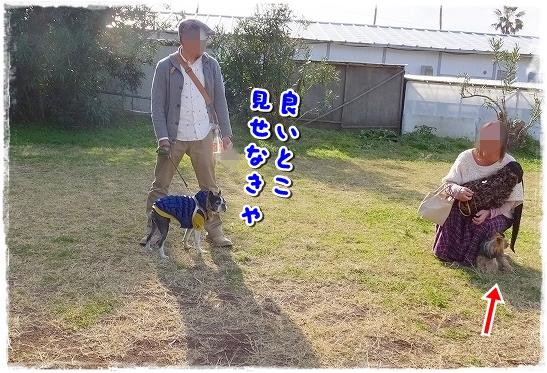 S0124611-crop.jpg