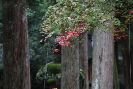 永平寺での唯一の秋色、み~~つけた。