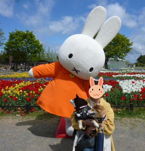 チューリップとウサギさん