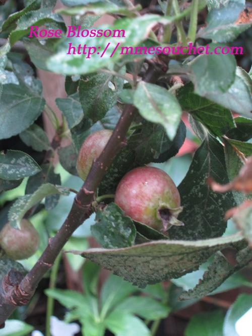 apple20111018.jpg