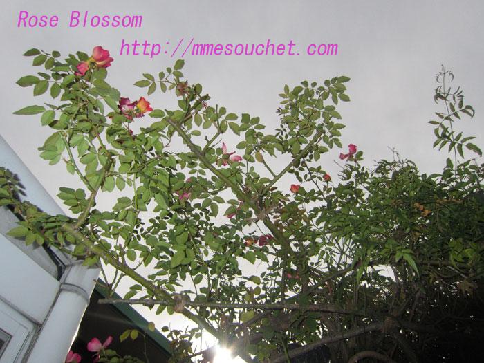 coctail20120101.jpg
