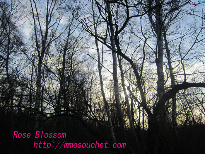 forest20120124.jpg