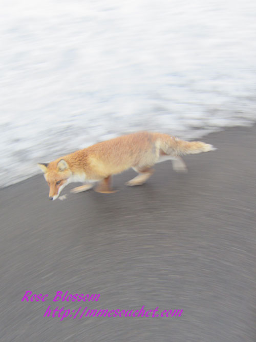 fox20120311.jpg