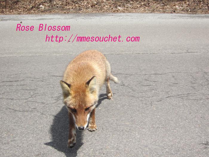 fox201204101.jpg