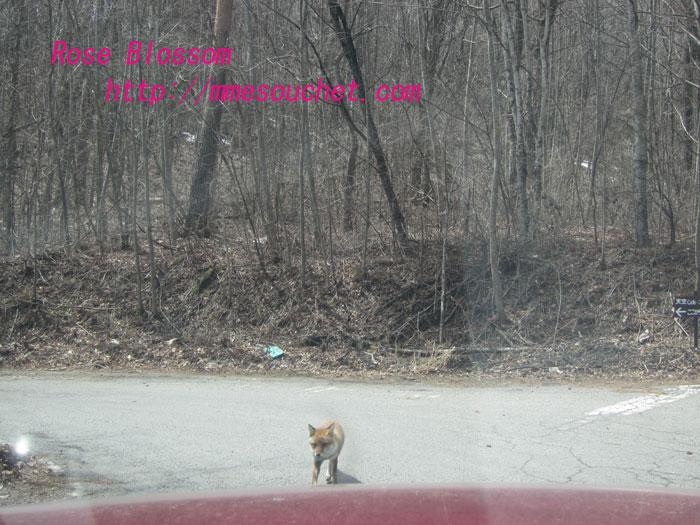 foxcar20120410.jpg