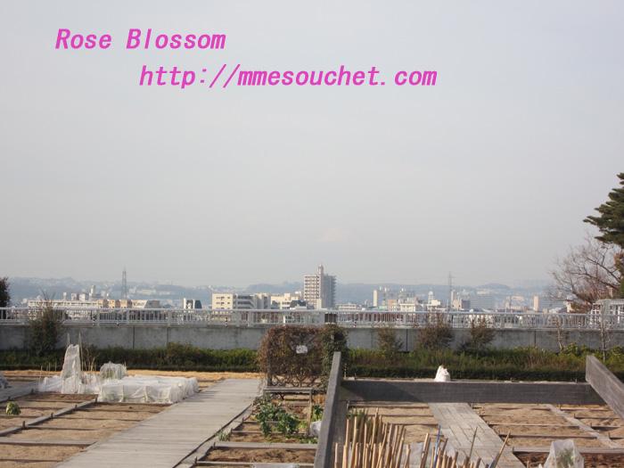 fuji20120119.jpg