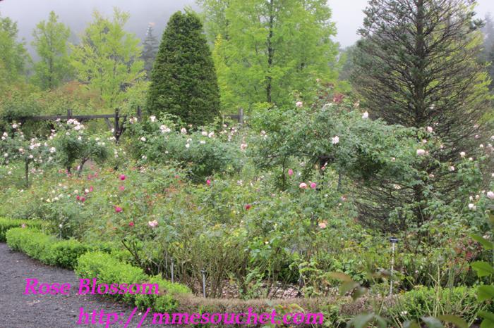 garden20110920.jpg