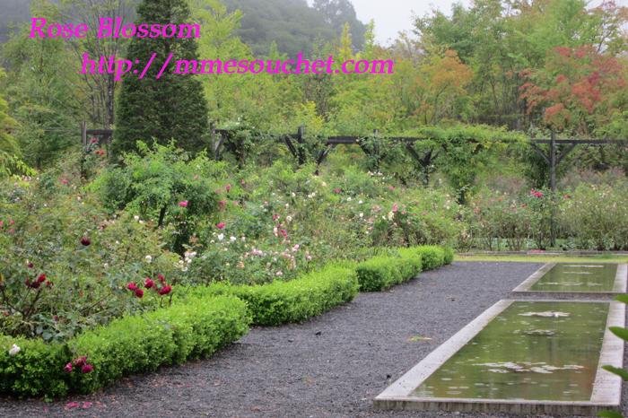 garden201109201.jpg