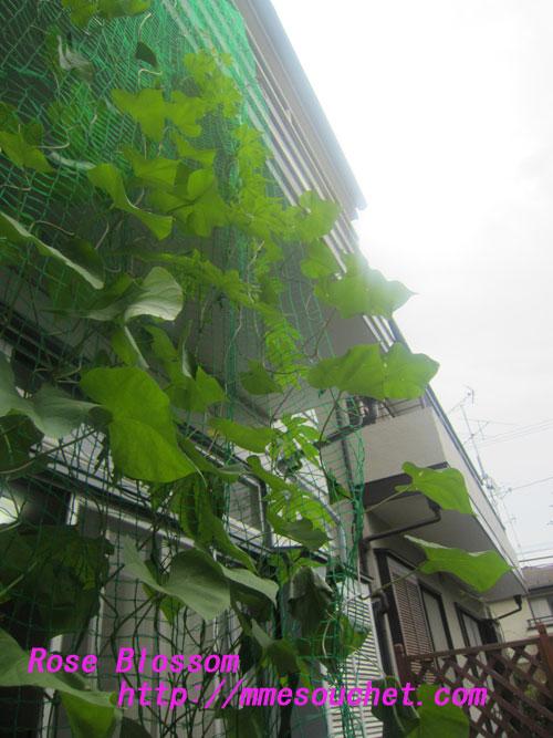 green20120712.jpg