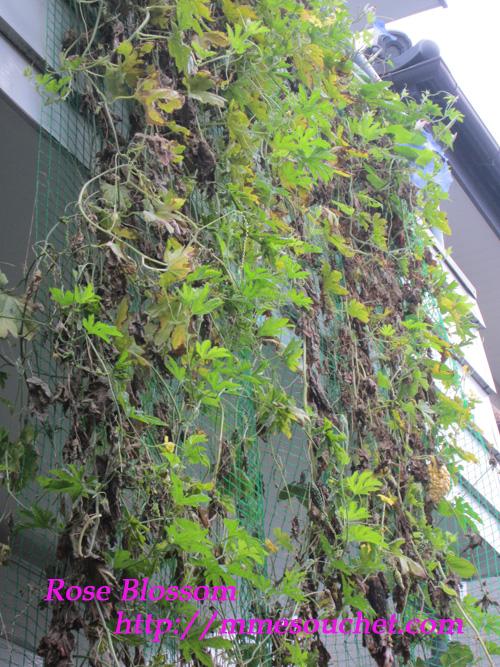 greencarten20111024.jpg